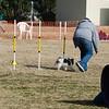 13 12-15 Agility dogs 2855
