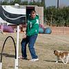 13 12-15 Agility dogs 2868