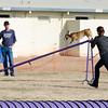 13 12-15 Agility dogs 2864