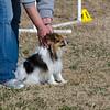 13 12-15 Agility dogs 2850