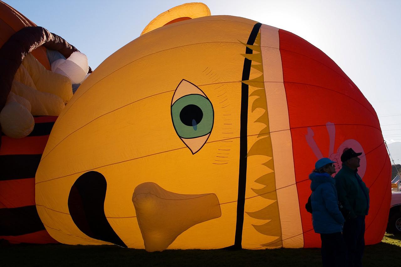 Little Pirate Wakes Up @ Albuquerque Festival - jbaz43
