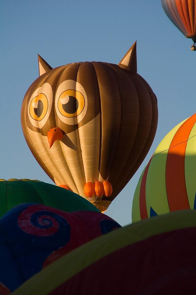 Peek-A-Boo @ Albuquerque Festival - jbaz47