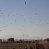 Balloons fill the sky near our house in Corrales.