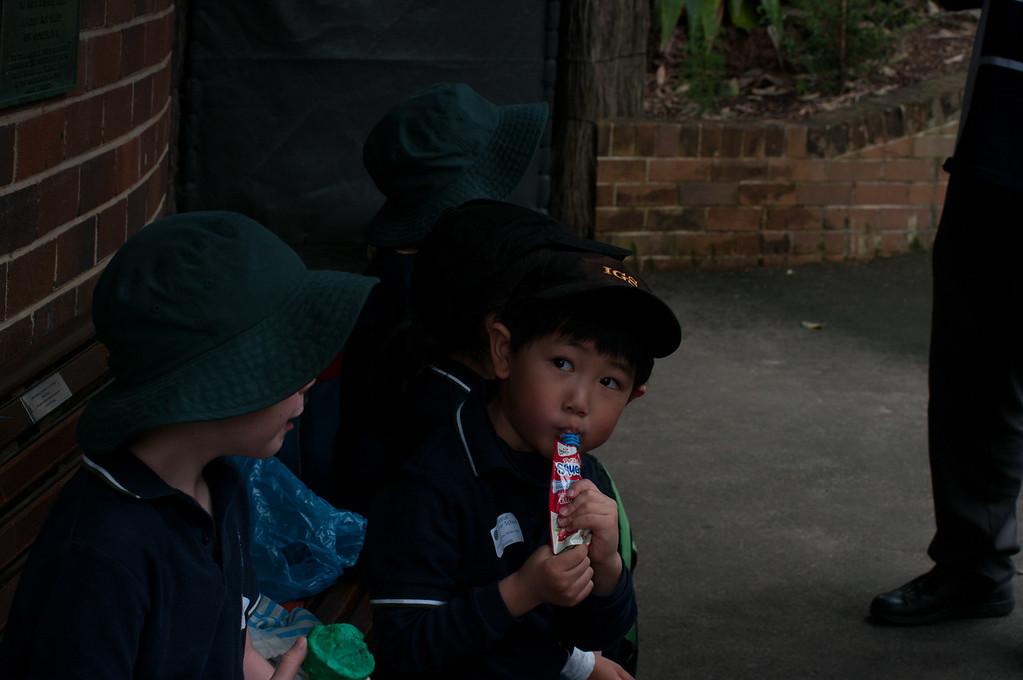 Alex IGS Taronga Zoo Excursion 2014