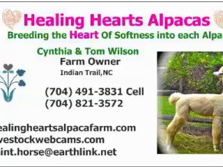 VIDEO:  Healing Hearts Alpaca Shearing 4-11-14