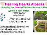 VIDEO:  Healing Hearts Alpaca Shearing 4-11-14