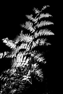 Fern light