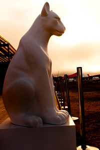 Puma Sun
