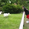 Alex gets reacquainted with the swan that bit him as a child....