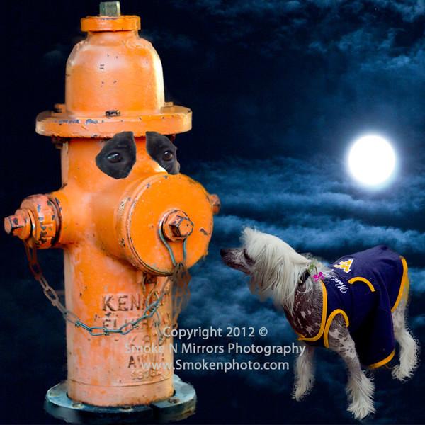 Hydrant Moon Dog