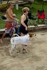 Dog Splash 2012_2012_08_26_9022