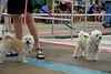 Dog Splash 2012_2012_08_26_9083