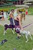 Dog Splash 2012_2012_08_26_9109