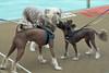Dog Splash 2012_2012_08_26_9165