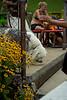 Dog Splash 2012_2012_08_26_9158