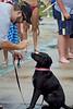 Dog Splash 2012_2012_08_26_9246