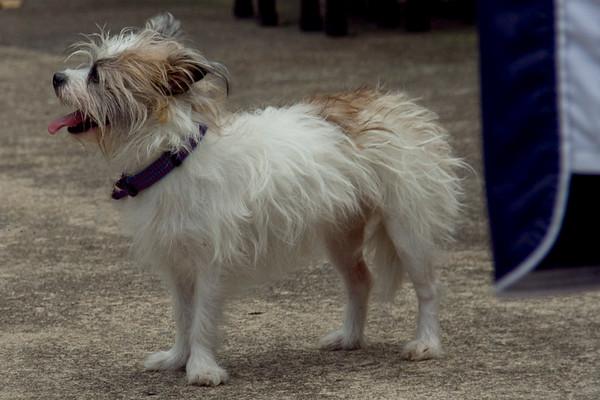 Dog Splash 2012_2012_08_26_9309