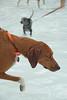 Dog Splash 2012_2012_08_26_9067