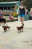 Dog Splash 2012_2012_08_26_9194