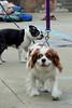 Dog Splash 2012_2012_08_26_9253