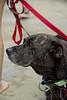 Dog Splash 2012_2012_08_26_9245