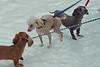 Dog Splash 2012_2012_08_26_9077