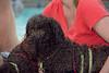 Dog Splash 2012_2012_08_26_9059