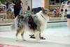 Dog Splash 2012_2012_08_26_9134
