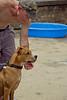 Dog Splash 2012_2012_08_26_9088