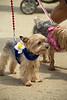 Dog Splash 2012_2012_08_26_9172