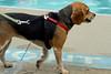 Dog Splash 2012_2012_08_26_9149