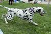 Dog Splash 2012_2012_08_26_9110
