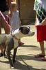 Dog Splash 2012_2012_08_26_9220