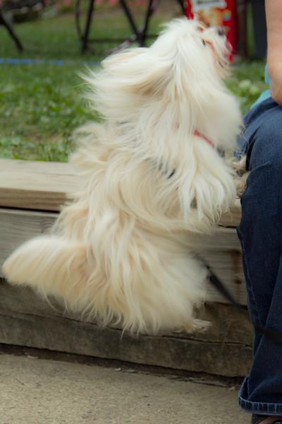 Dog Splash 2012_2012_08_26_9142