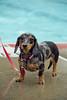 Dog Splash 2012_2012_08_26_9123