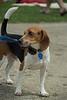 Dog Splash 2012_2012_08_26_9186