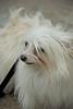 Dog Splash 2012_2012_08_26_9235
