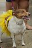 Dog Splash 2012_2012_08_26_9138
