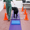 Record-Eagle/Jan-Michael Stump<br /> Erin Cox (cq), a veterinary technician at Long Lake Animal Hospital, has a rehab session with Nelli, a newfoundland mix recovering from ACL surgery, in the hospital's new Animal Rehabilitation Center of Northern Michigan. The center features a number of methods of care for animals' injuries, from laser treatments to an underwater treadmill.