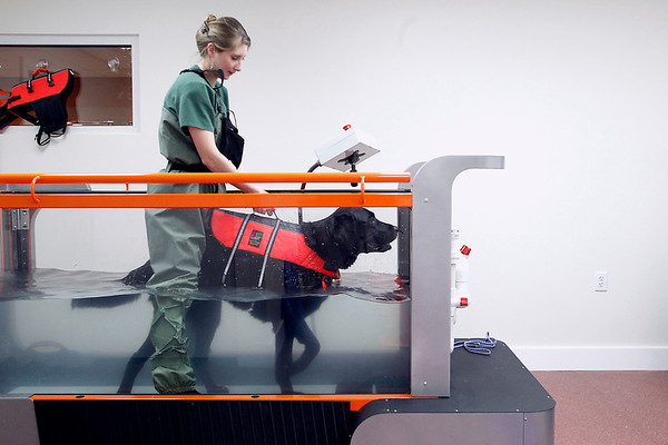Record-Eagle/Jan-Michael Stump<br /> Erin Cox, a veterinary technician at Long Lake Animal Hospital, holds Nelli, a newfoundland mix recovering from ACL surgery, during an underwater treadmill session in the hospital's new Animal Rehabilitation Center of Northern Michigan. The center features a number of methods of care for animals' injuries, from laser treatments to an underwater treadmill.