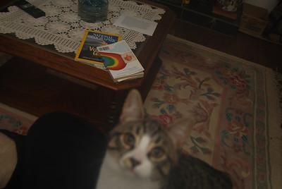 Lindas Cat
