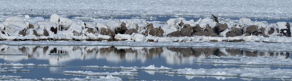0205 icy harbor 2
