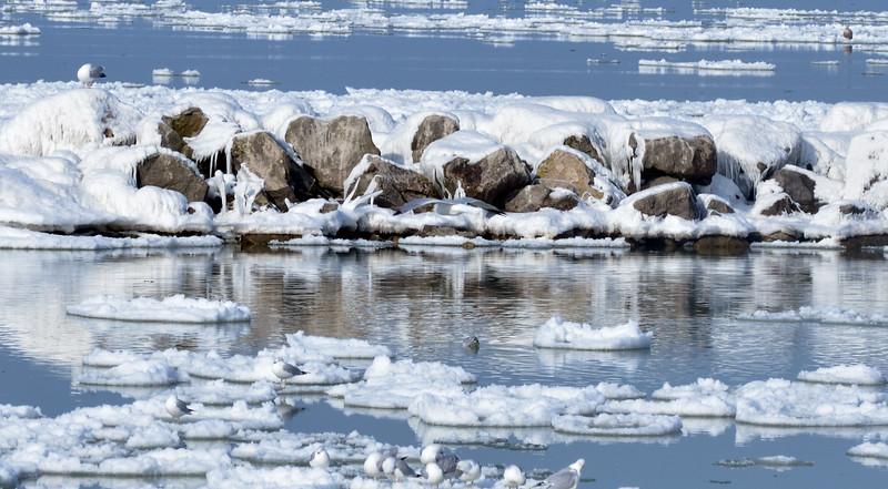 0207 icy harbor