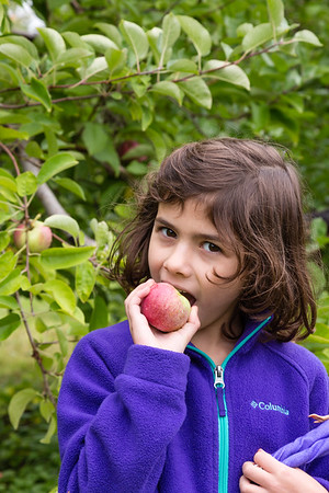 Apple Picking - Fall 2016