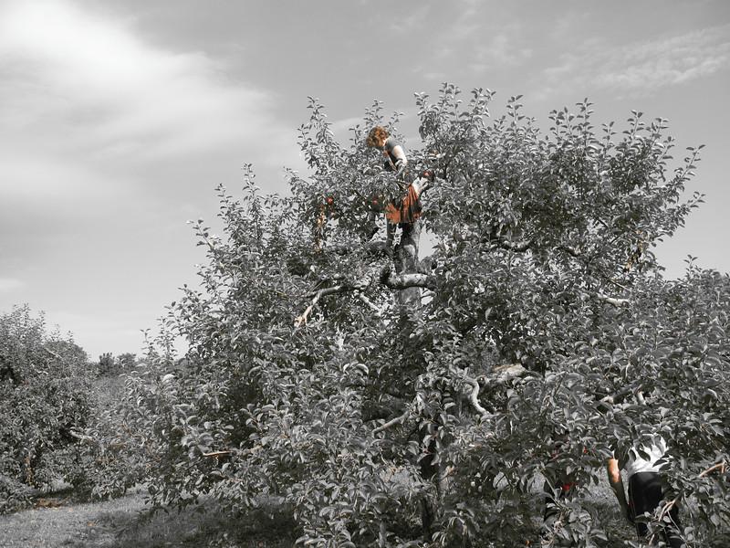 The Harvester's Vista