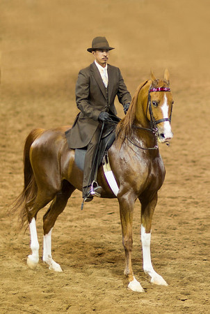 Male rider suit on horse 7857