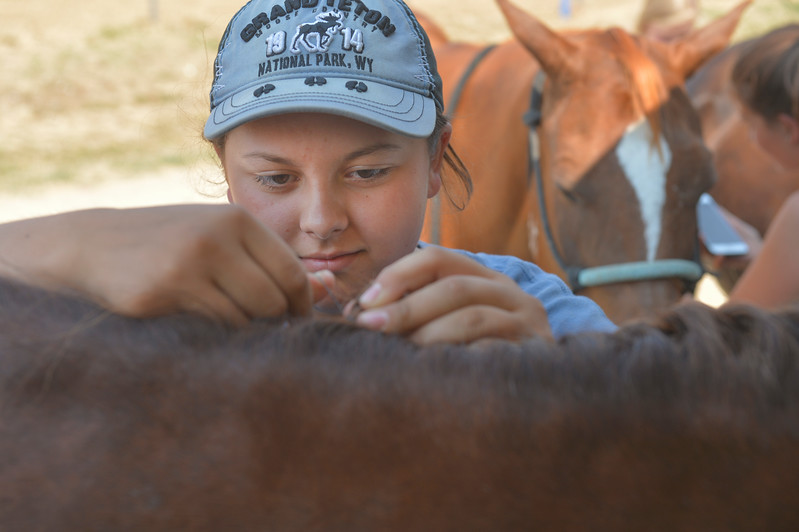 Justin Sheely | The Sheridan Press<br /> Paige Padilla braids her horse's hair during the Sheridan County Fair Friday at the Sheridan County Fairgrounds.