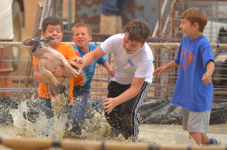Justin Sheely | The Sheridan Press<br /> The Meadowlark Hog Squashers, from left, Bradly Price, Bryson Adsit, Beau Schneider and Hesston Ferber carry their pig only to lose it before reaching the bucket during the annual Pig Wrestling event Saturday at the Sheridan County Fairgrounds. The objective for the teams is to catch the pig from the muddy pit and place it bottom-down into a bucket under the time limit. Winners are determined by the shortest time to complete the task.