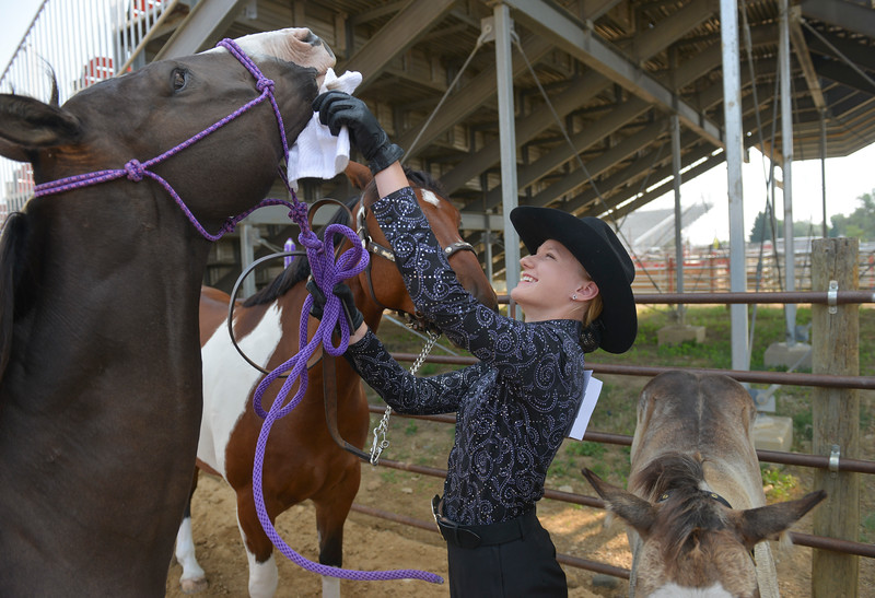 Justin Sheely | The Sheridan Press<br /> Lainey Konetzki makes final cleaning touches to her horse for the horse showmanship competition during the Sheridan County Fair at the Sheridan County Fairgrounds on Wednesday.