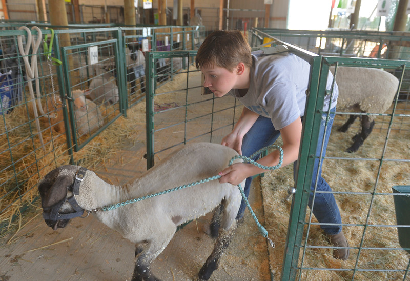 Justin Sheely | The Sheridan Press<br /> Sixteen-year-old Anastasia Beutler leads her sheep to get washed during the Sheridan County Fair Friday at the Sheridan County Fairgrounds.